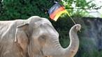 Conheça Yashoda, o elefante que vai prever os resultados do Euro2020