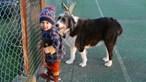 Já há uma explicação para a cadela da família de Noah ter abandonado o menino