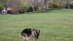 """Morreu um dos cães da família Biden há 13 anos: """"Sentiremos a falta dele para sempre"""""""