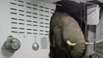 Casal em choque com elefante que destruiu parede, invadiu a cozinha e roubou petiscos. Veja as imagens