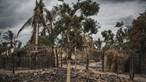 Portugueses em Cabo Delgado com 'vontade férrea' de investir na região