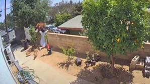 Jovem de 17 anos enfrenta urso para salvar cães na Califórnia