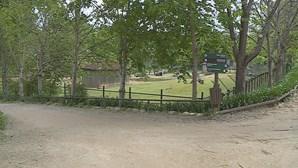 Zoo de Gaia oferece experiências de proximidade