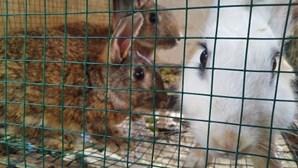Parlamento Europeu vai proibir criação de animais em gaiolas
