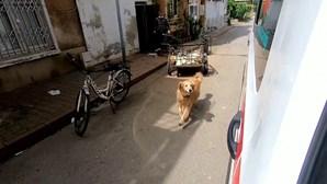 Cão segue ambulância que transporta a dona até ao hospital