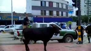 Vacas à solta assustam população em cidade na Bolívia