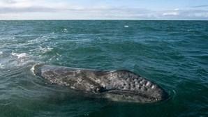 """""""Fiquei fechado cerca de 30 segundos"""": Mergulhador foi engolido por baleia e sobreviveu"""