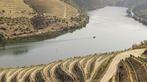 Rota dos vinhos do Porto e Norte de Portugal une regiões e pretende ser uma referência internacional