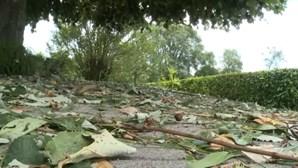 Distrito de Viseu foi dos mais afetados devido ao mau tempo sentido este fim de semana