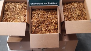 GNR apreende 100 quilos de folha de tabaco em Setúbal