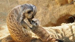 Conheça as novas crias do Jardim Zoológico de Lisboa