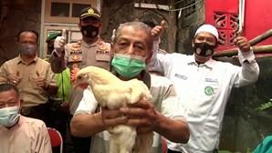 Cidade indonésia oferece galinhas a idosos que se vacinem contra a Covid-19
