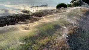 Teia de aranha gigante cobre zona de pasto na Austrália