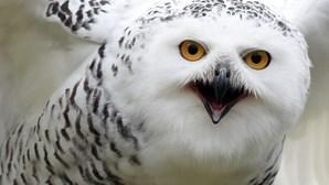 Aves de rapina: Conheça as 'caçadoras' do ar