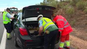 GNR 'tapa' lacuna no seguro do carro de Eduardo Cabrita em acidente que matou um homem