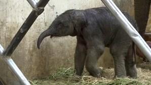 Zoo turco dá as boas-vindas a bebé elefante