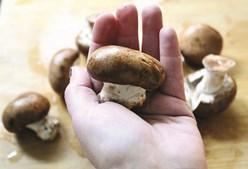 Cogumelos tem propriedades já bem conhecidas