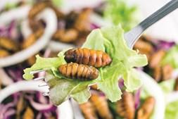 As Larvas Podem passar a fazer parte do menu  do futuro