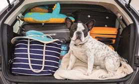 Nas viagens de carro, a segurança está primeiro: nunca deixe o cão ou o gato soltos na viatura