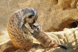 Agora é possível observar a interação entre mães e crias
