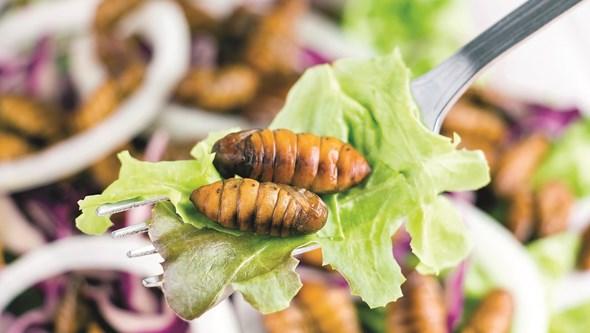 Algas, larvas e fungos: A Alimentação do futuro