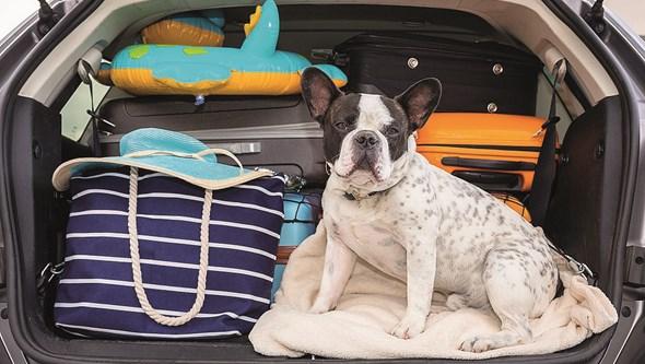 Viajar com animais: Diversão extra que exige planeamento. Saiba qual