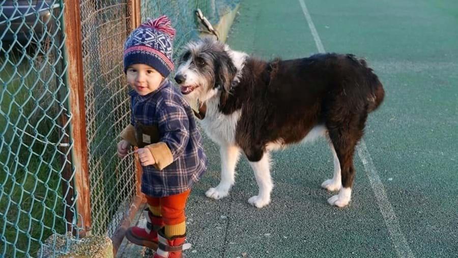 Noah e a cadela da família saíram juntos de casa