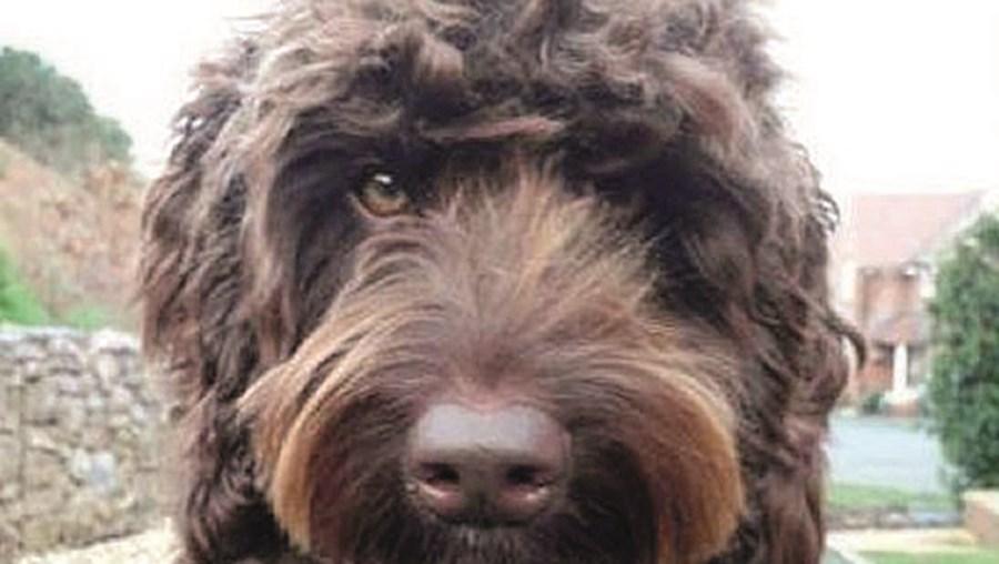 Cão 'Digby'