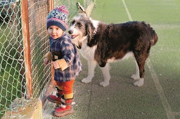 Noah, de dois anos e meio, terá saído com a cadela, Melina