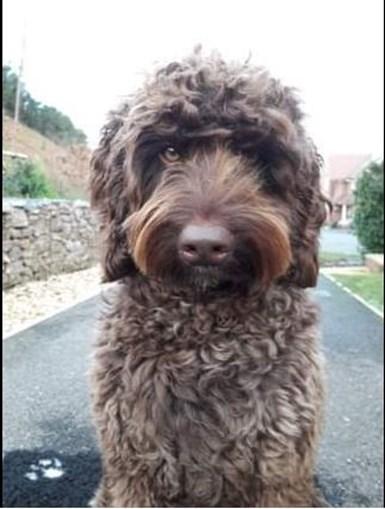 Digby, o cão bombeiro