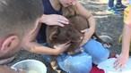 Morte de animais em Santo Tirso sem culpados