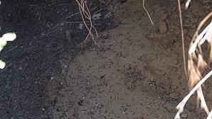 Cratera ameaça acesso a praia em Lagoa