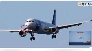 """Ave causa acidente """"extremamente improvável"""" com avião no aeroporto do Funchal"""