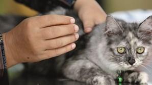 Pedidos de ajuda financeira para os animais disparam em Portugal com a pandemia
