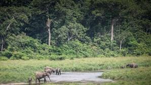 Parque Nacional do Ivindo, no Gabão, classificado Património Mundial da UNESCO