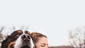 Sabe o que fazer se perder o seu cão? Veja aqui
