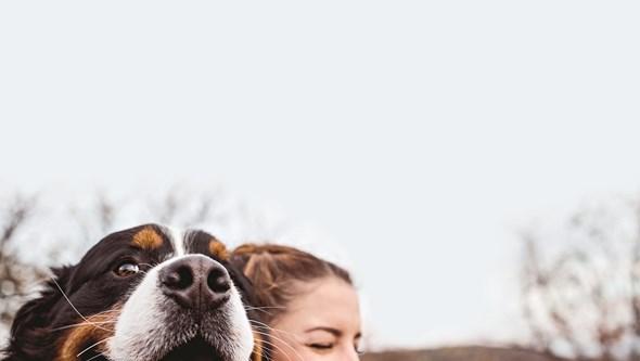 O que fazer se perder o seu cão?