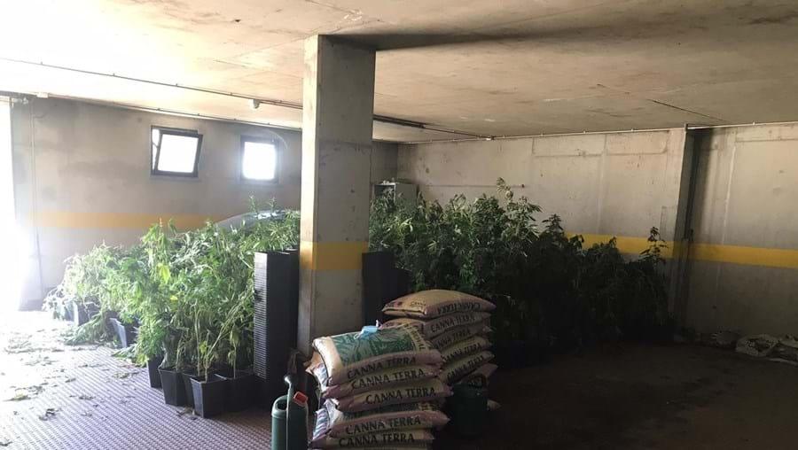 Homem de 25 anos detido por suspeitas de tráfico e cultivo de droga em Mértola Img_900x508$2021_07_05_11_36_58_1057257