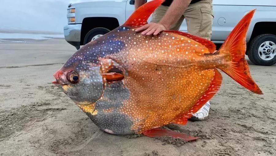 Peixe tropical de 45 kg surge no Oregon