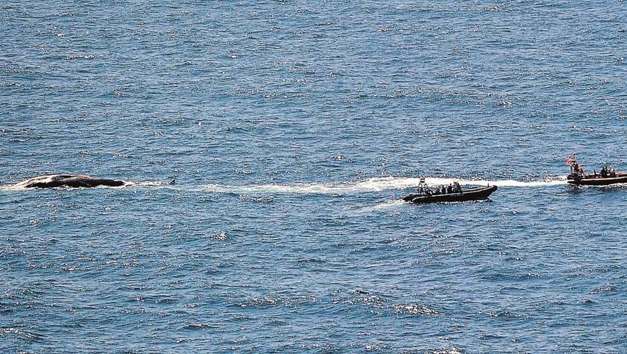 Cadáver de baleia