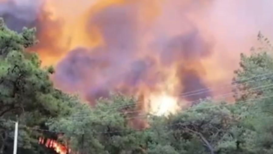 Suspeitas de crime em fogos florestais que lavram na Turquia