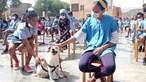 ONG cabo-verdiana pede clarificação legal sobre maus tratos a animais domésticos