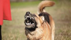 Cão reformado da GNR mata caniche à dentada