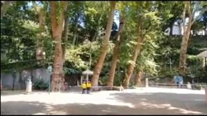 Árvore de grande porte cai em largo na Madeira onde morreram 13 pessoas em 2017
