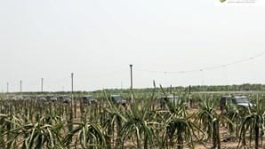 Morreu João Macedo, português e líder de um dos maiores projetos agroindustriais angolanos