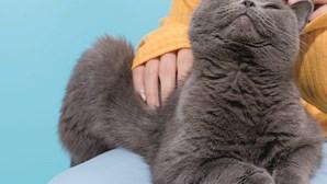 Gatos domésticos estão mais 'doces' que nunca após confinamento