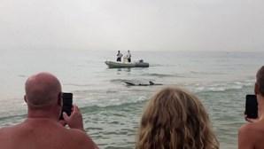 Tubarão-azul de 2,5 metros fica encalhado na praia em Espanha. Veja o momento