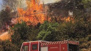 Ministério da Agricultura cria apoio alimentar para agricultores após incêndios de agosto