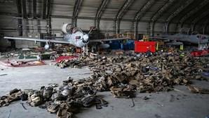 Tropas norte-americanas deixaram para trás em Cabul dezenas de cães do Exército dos EUA