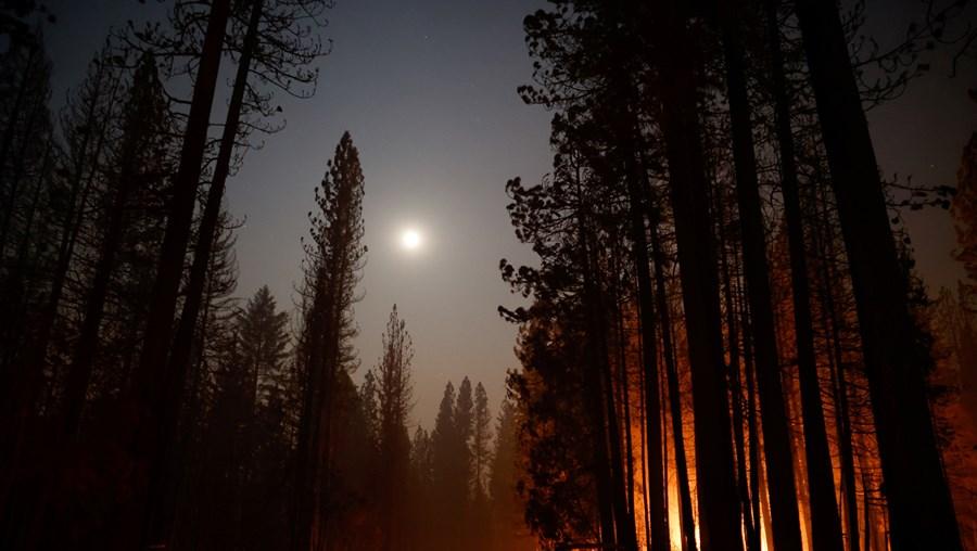 Rescaldo do incêndio em Grizzly Flats, na California